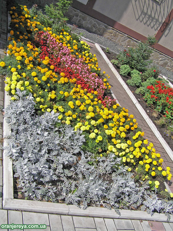 Цветник - цветочная клумба