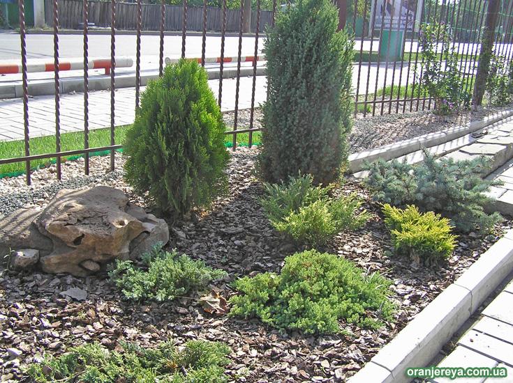 Посадка декоративных растений: деревьев и кустарников